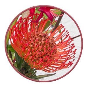 Protea in der Valentins Kreation ma vie